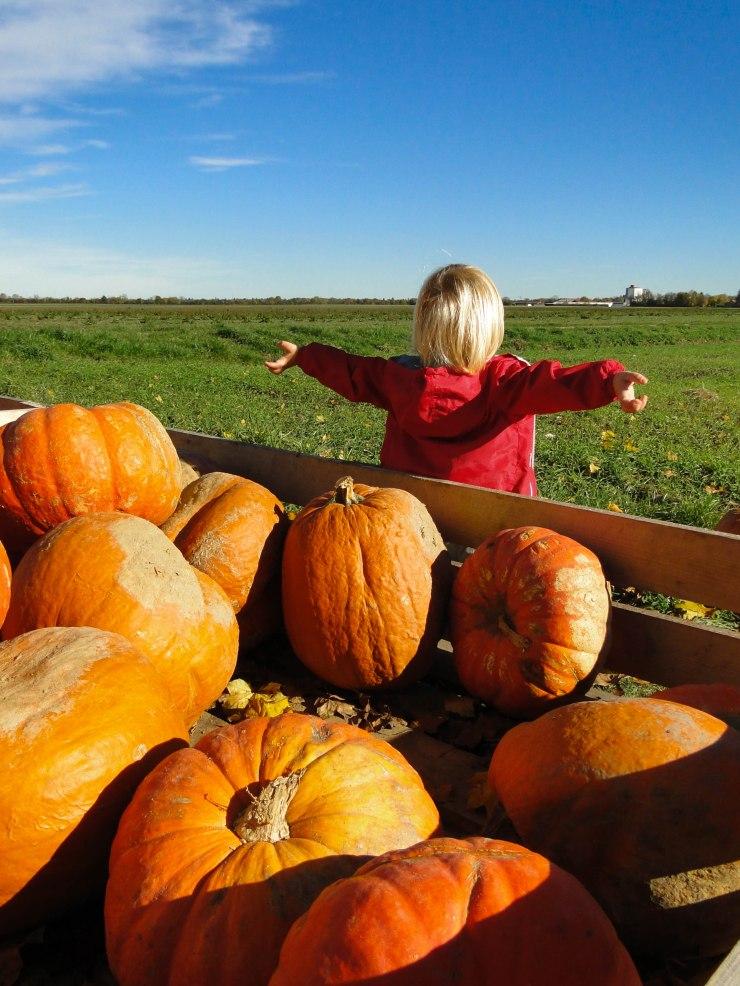 b&pumpkins-1