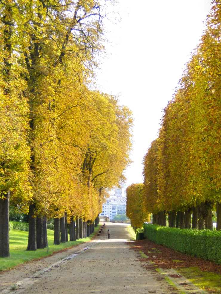 chestnut trees alley