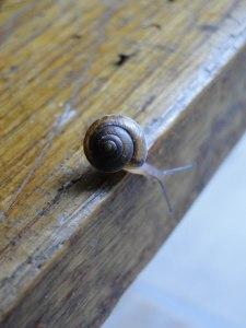 hydrangea&snail-4