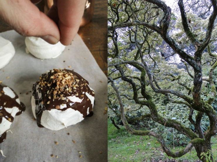 meringue &tree