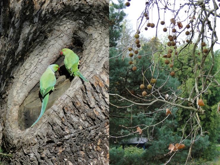 parrots&spheres