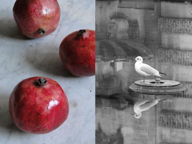 pomegranates&bird