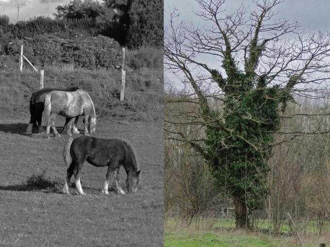 horses tree