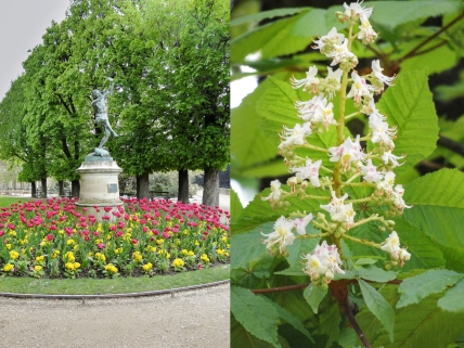 spring chestnuts4