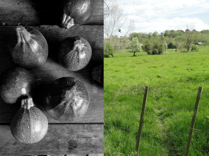 zucchini&meadow