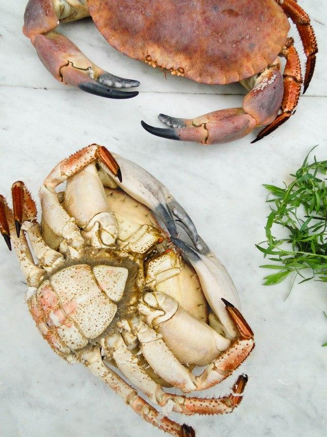 crab-14