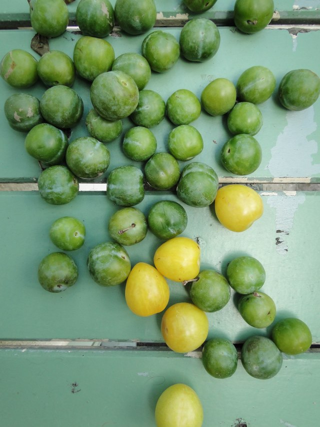 reine claude plums-2