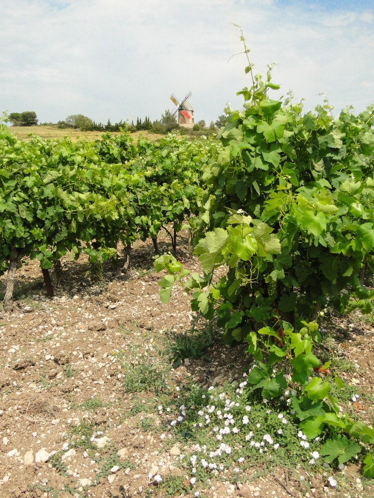 vines-windmill