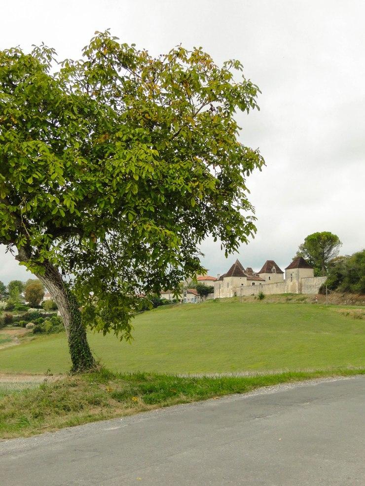 walnut-tree-lusignac
